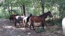 ponykamp 2017 kamp 1 05 07_29